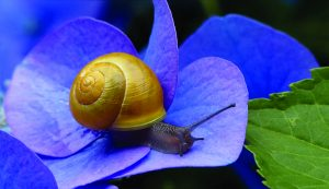 the benefits of snail mucus